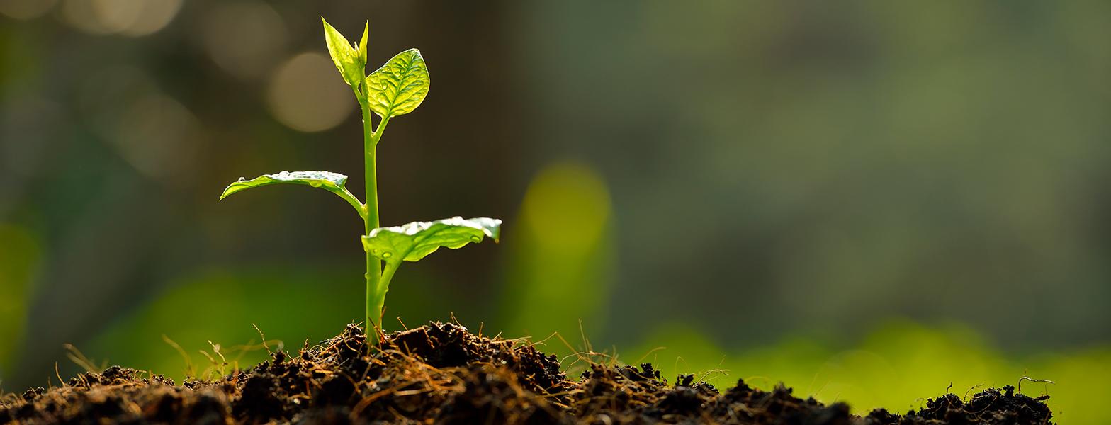 Гибкая упаковка для семян, грунта и удобрений оптом
